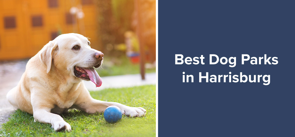 Best Dog Parks in Harrisburg