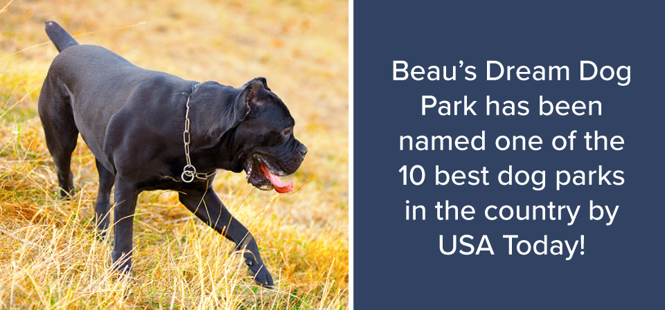 Beau's Dream Dog Park
