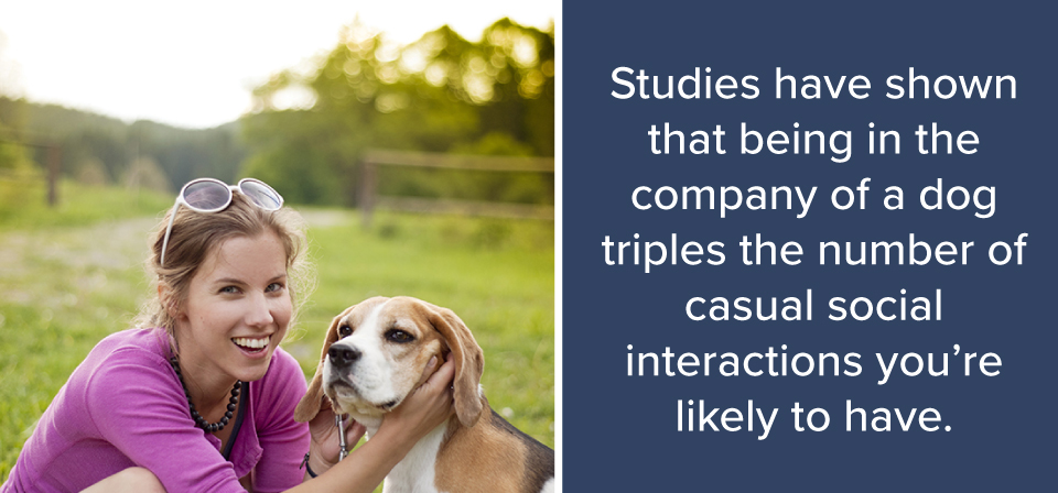 Studies show dogs triple the number of casual social interactions your likely to have.