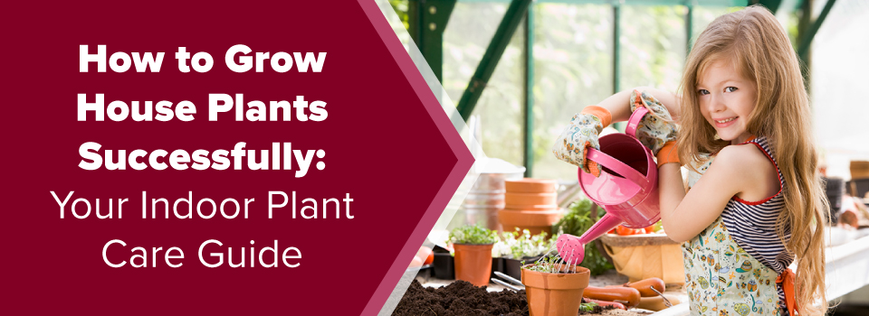 How to Grown House Plants Successfully