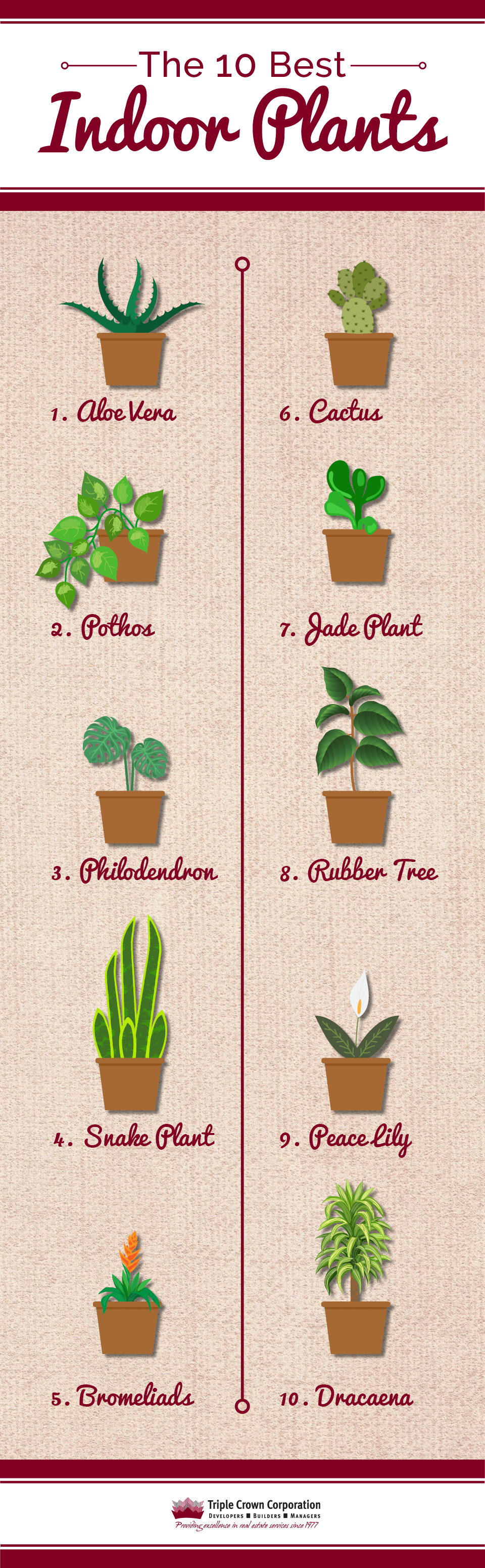 10 Best Indoor Plants Infographic