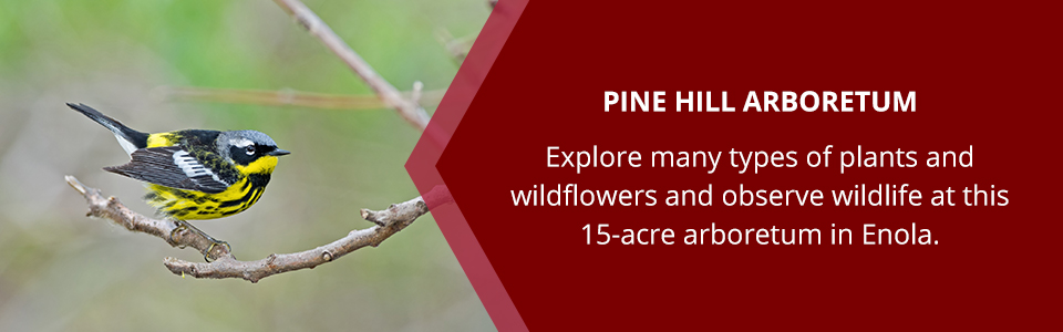 Pine Hill Arboretum: Explore many types of plants and wildflowers and observe wildlife at this 15-acre arboretum in Enola.