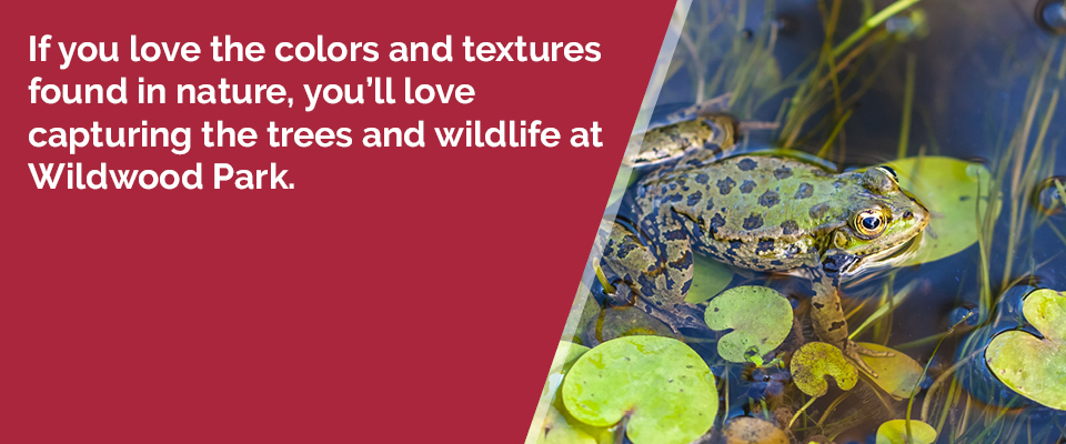 If you love the colors and textures found in nature, you'll love capturing the trees and wildlife at Wildwood Park.