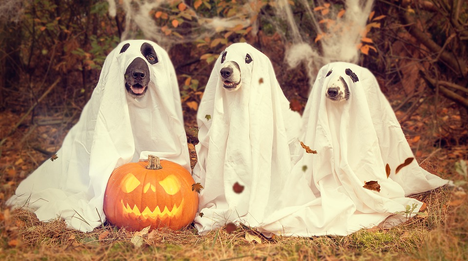 Halloween Ghost Dogs