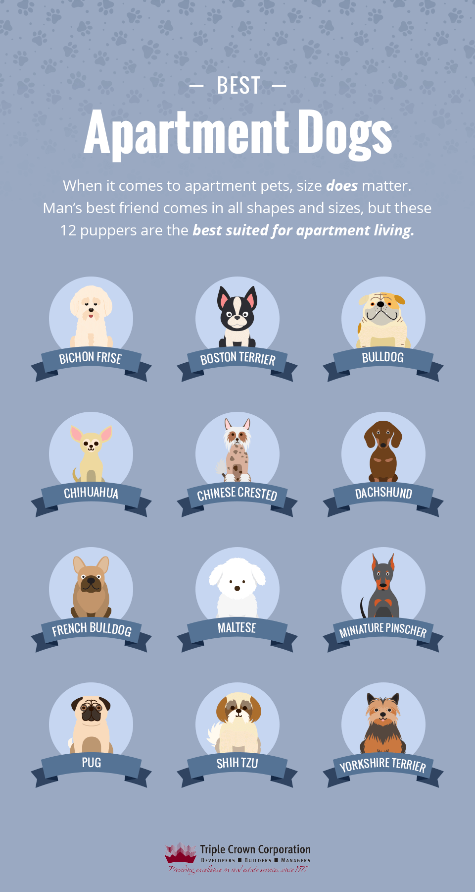 The 12 Best Dogs Breeds For Apartments